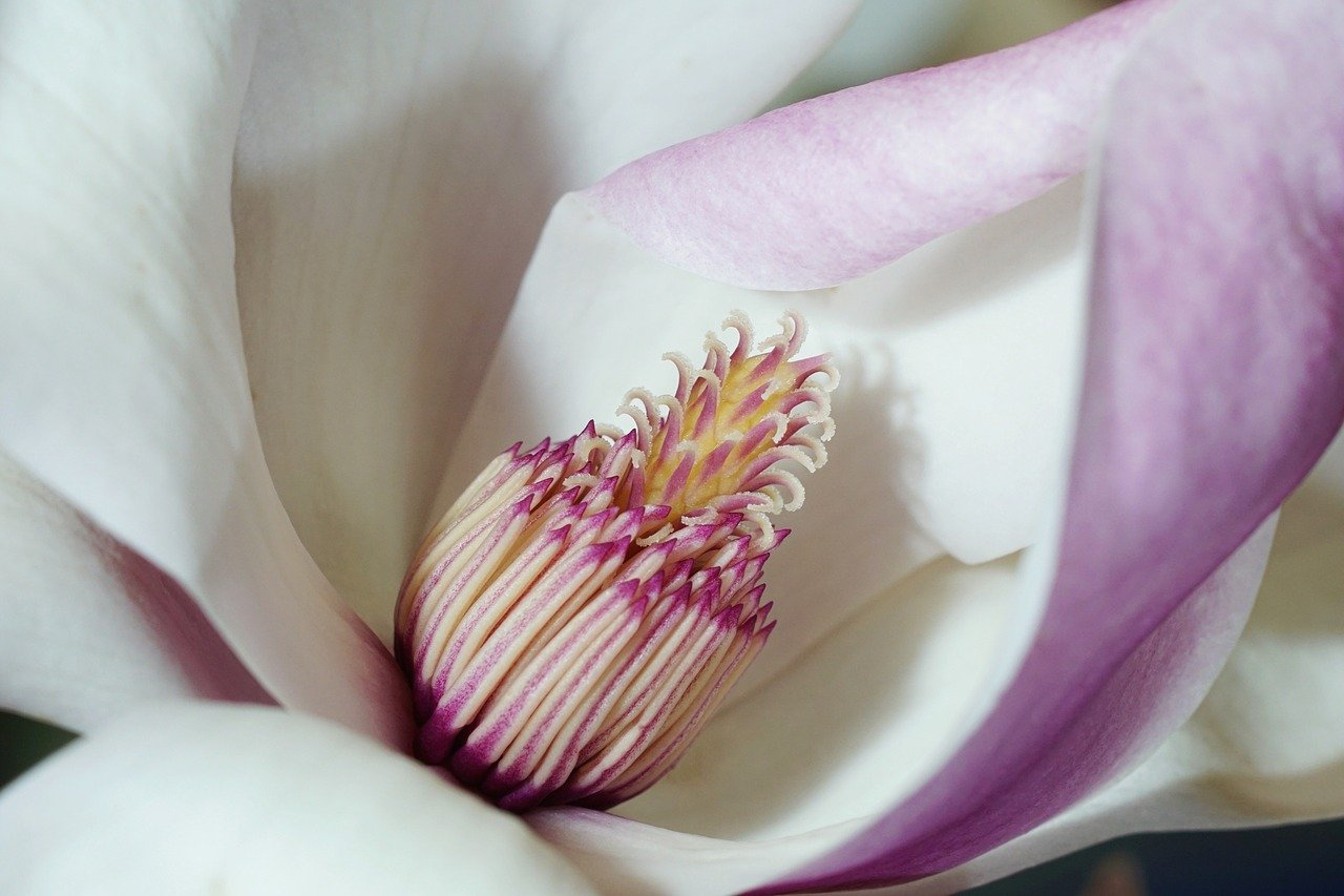Close up of beautiful flower. Beauty in the world